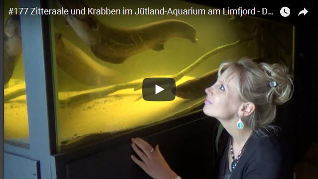 ElischebaTV_177_640x360 Jütland Aquarium am Limfjord Dänemark